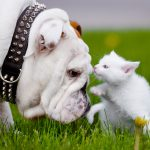 Measures To Stop Your Dog From Hunting Cats