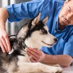Causes of dog diseases